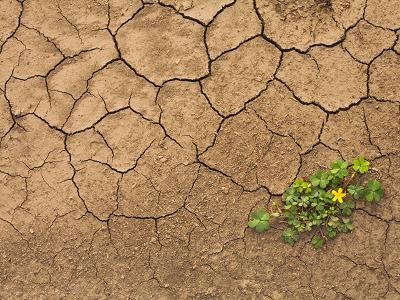 Drought-induced crop failures and inflation